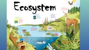 "Proiectul ""Diversity of Ecosystems"