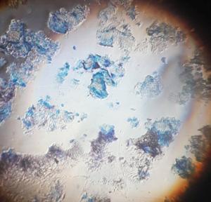 Lumea văzută la microscop
